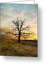 Lone Oak On The Marsh Greeting Card