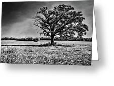 Lone Oak Tree In Black And White Greeting Card