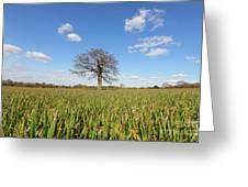 Lone Oak Tree In Wheat Field Greeting Card