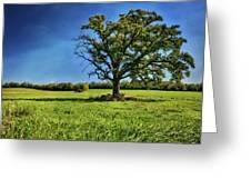 Lone Oak Tree In Wisconsin Field Greeting Card