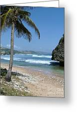 Lone Palm On Barbados Coast Greeting Card