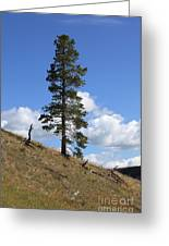 Lone Pine, Yellowstone Greeting Card