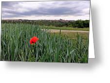 Lone Poppy Amongst Field Of Hops Greeting Card