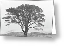 Lone Scots Pine, Crannoch Woods Greeting Card