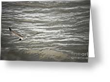 Lone Sea Gull Greeting Card