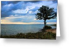 Lone Tree And Beach Flowers Greeting Card