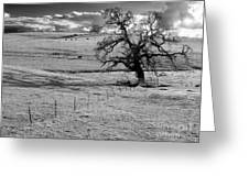 Lone Tree And Cows 2 Greeting Card