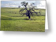Lone Tree And Cows Greeting Card