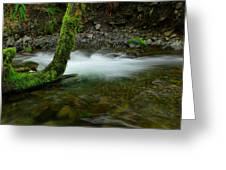 Lone Tree And Running Water Greeting Card