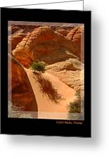 Lone Tree At Coyote Buttes Arizona Greeting Card