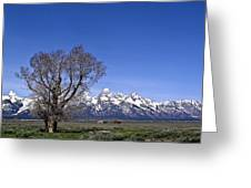 Lone Tree At Tetons Greeting Card