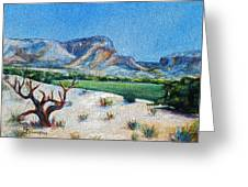 Lone Tree At The Ghost Ranch Greeting Card