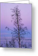 Lone Tree At Winter Sunset Greeting Card
