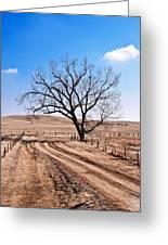 Lone Tree February 2010 Greeting Card