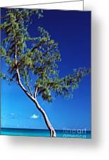 Lone Tree Hawaii Greeting Card