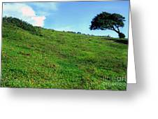 Lone Tree Hill  Greeting Card