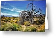 Lone Tree In Blooming Desert Greeting Card