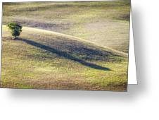 Lone Tree In Tuscany Greeting Card