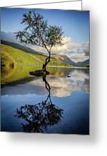 Lone Tree, Llyn Padarn Greeting Card