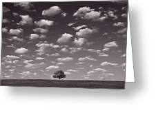 Lone Tree Morning In B And W Greeting Card