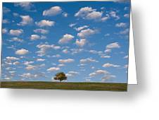 Lone Tree Morning Greeting Card