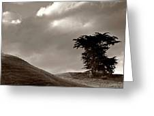 Lone Tree On A New Zealand Hillside Greeting Card