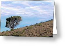 Lone Tree On Hillside In Central Oregon High Desert Greeting Card
