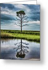 Lone Tree Reflected Greeting Card