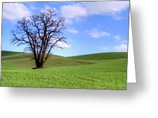 Lone Tree - Rolling Hills - Summer Sky Greeting Card