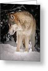 Lone Wolf IIi Greeting Card
