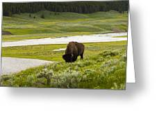 Lonely Bison Valley Greeting Card