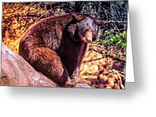 Lonely Black Bear On A Rock Greeting Card