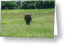 Lonely Cow 2 Greeting Card