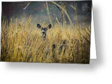 Lonely Deer In The Field Greeting Card