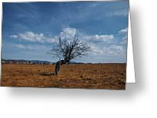 Lonely Dry Tree In A Field Greeting Card