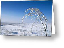 Lonely Frost  Greeting Card