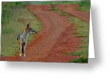 Lonely Jackal Greeting Card