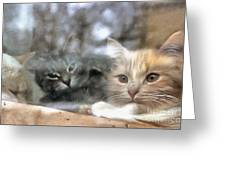 Lonely Kittens Behind The Glass Greeting Card