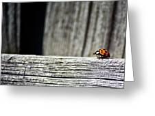 Lonely Ladybug Greeting Card