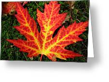 Lonely Leaf ... Greeting Card