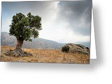 Lonely Olive Tree And Stormy Cloudy Sky Greeting Card