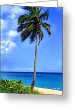 Lonely Palm Tree Los Tubos Beach Greeting Card
