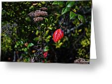 Lonely Red Leaf Greeting Card