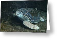 Lonely Sea Turtle Greeting Card