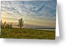 Lonely Tree In Dintelse Gorzen Greeting Card