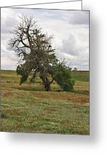 Lonely Tree In West Texas Greeting Card