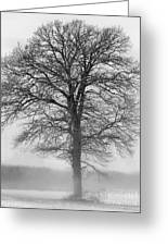 Lonely Winter Tree Greeting Card