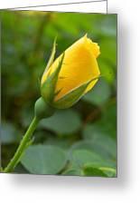 Lonesome Bud Greeting Card