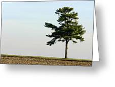 Lonesome Fir Greeting Card