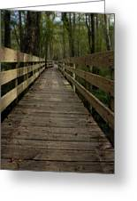 Long Boardwalk Through The Wetlands Greeting Card